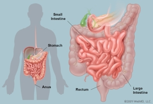 leaky gut intestinal permeability