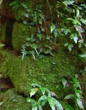 corner stones by Diane