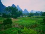 yangshuo-fields-byDiane