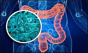 gut and microbiota