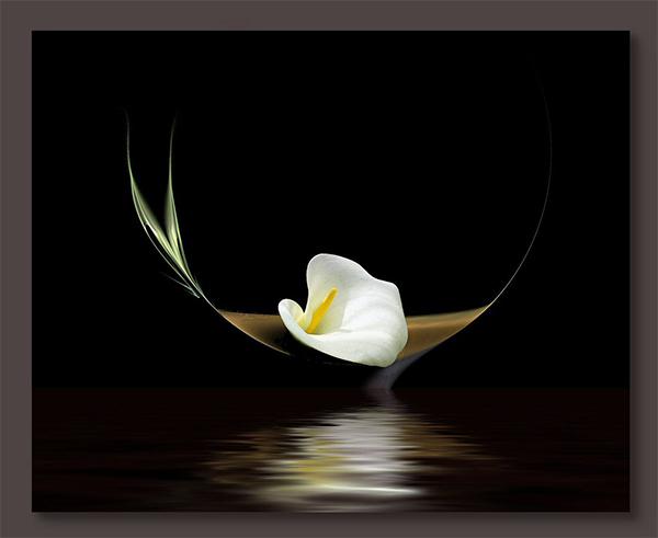 calla-lily on dark water