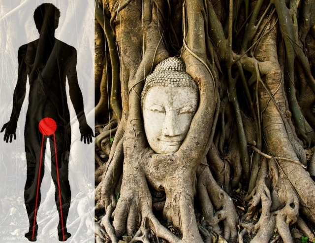 1st chakra Buddha in tree roots Flickr