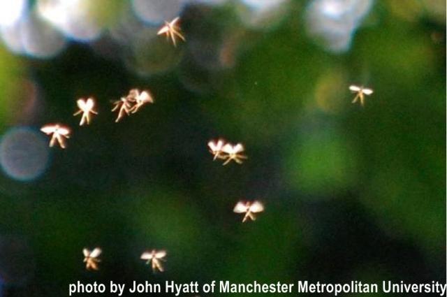 fairy-photo by John Hyatt of Manchester Metropolitan University