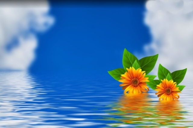 flowers on water Susan Cipriano PxHere