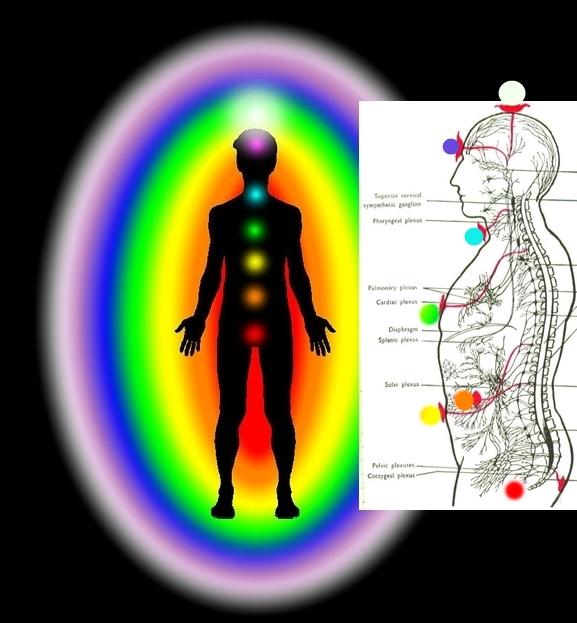 chakras n nerves pixabay n wikimedia n DS