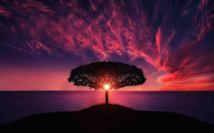 dramatic pink sky tree sunheart piqsels