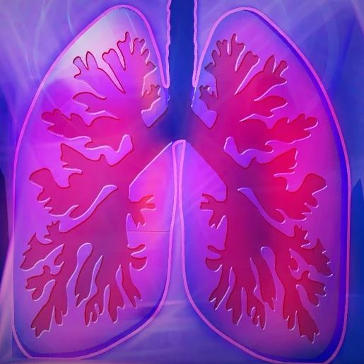 Lungs by kalhh on Pixabay