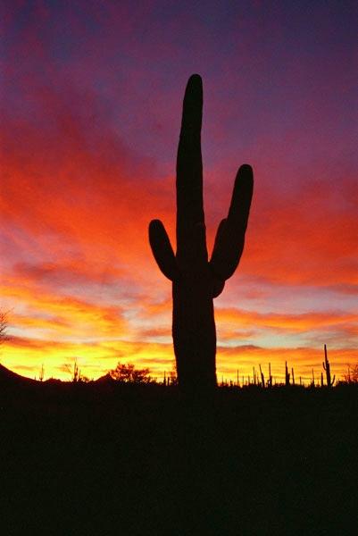 Saguaro-national-park sunset Wikimedia Commons 96d