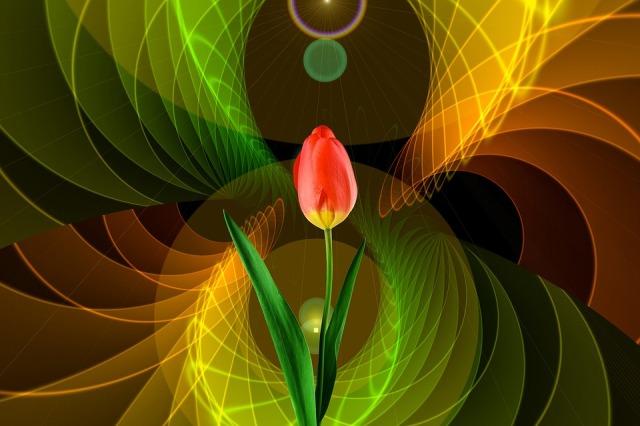 tulip-light