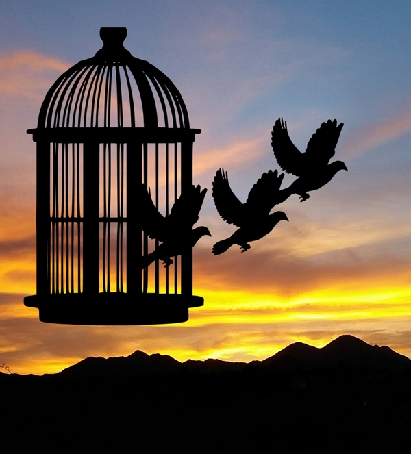 Birds fly free MaxPixel and my sunset
