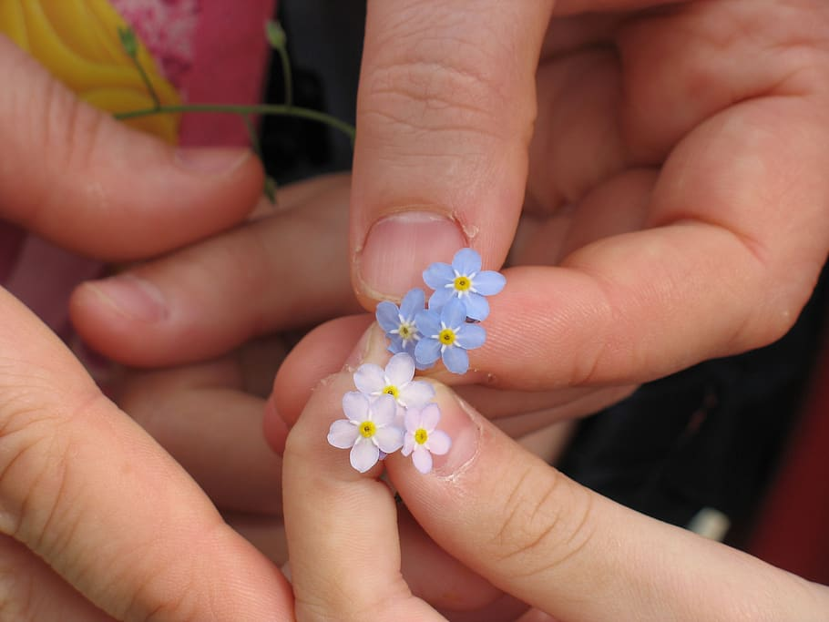 forget-me-not-flowers-hands Pxfuel